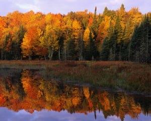 coloured-leaves-shore